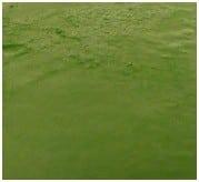 CHEVREFEUILLE Savon végétal enrichi à la glycérine Fabrication Artisanale AU BAIN DOUCHE